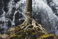 Rooted and Grounded in Love